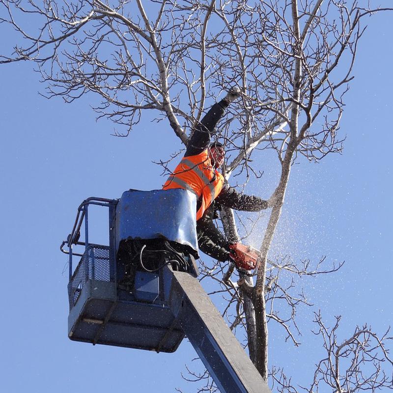 Baumschnitt und -fällung deeg Landschaftsgärtner