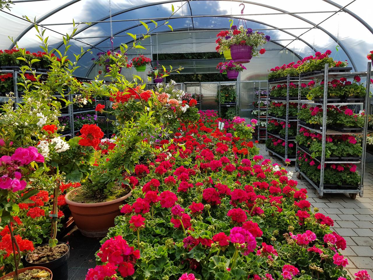 Gartenpflanzen deegs Pflanzenwelt
