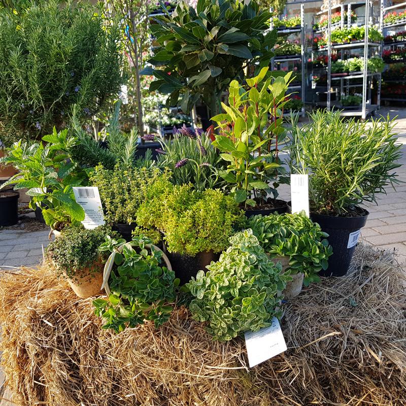 Gehölze deegs Pflanzenwelt