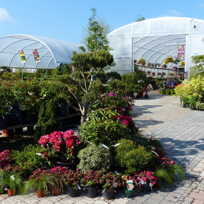 deeg's Pflanzenwelt Gärtner Gartenpflanzen Hof Saale