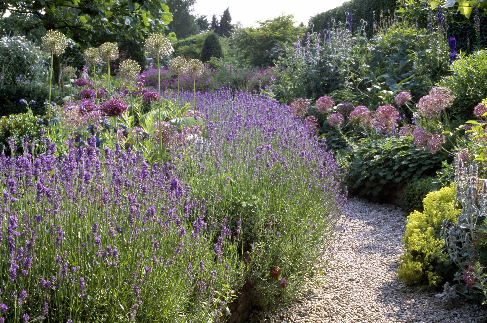 deeg Gartenpflanzen kaufen